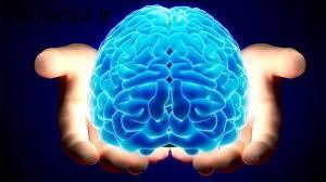 اهمیت به سلامت مغز