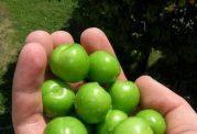 ضد چروک طبیعی و سبز رنگ