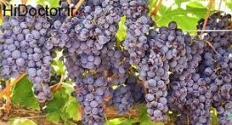 انگور و یک دنیا خاصیت