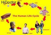 منظور از چرخه زندگی در خانواده چیست؟