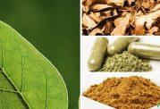 مکمل های گیاهی برای دیابتی ها