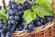 درمان با میوه های مختلف تابستانی