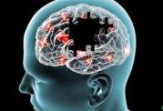 پیری مغز با افزایش چربی در بدن