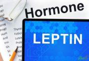 نقش لپتین در کاهش و افزایش اشتها