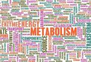 چه عادت هایی متابولیسم بدن را تقویت می کنند