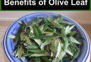استفاده های مختلف درمانی از برگ زیتون