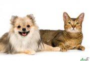 عارضه های خطرناک ناشی از نگهداری حیوان
