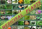 تقویت بافت عضله از طریق گیاهی
