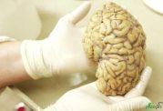 مطالعات جدید درمورد مراکز احساسات در مغز