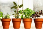 چاشنی های درمان کننده گیاهی برای بدن