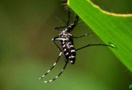 حمله ویروس زیکا به اعصاب مرکزی بدن