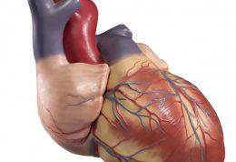 دانسته های عجیب در ارتباط با  قلب انسان