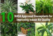 گیاهان خانگی تصفیه کننده هوای منزل