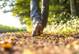 فراموش کردن پیاده روی در عصر بهاری! هرگز