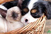 وجود کک در پوست حیوانات خانگی