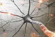 کشف ترکیبات حدید در درمان سرطان و ام اس توسط محققان داخلی