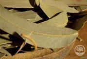 خاصیت های مختلف برگ برخی از گیاهان