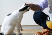 لمس گربه ها ممنوع