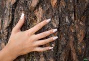 آشنایی با فایده های عصاره درخت کاج