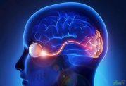 دستاوردهای علمی جدید پیرامون نقشه برداری از مغز