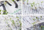 کاشت گل و گیاه با روزنامه