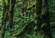 جنگل های هیرکانی در حال نابودی