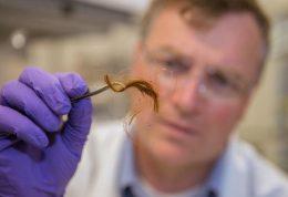 آزمایش پروتئین مو، روشی برای تشخیص هویت