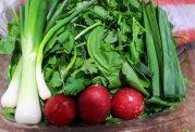 سبزی خوردن و هزار فایده که از آن بی خبرید