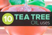 ویژگی های عصاره برگ درخت چای