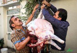 ذبح غیر بهداشتی در روز عید قربان