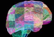 فعالیت مغز در هنگام صبح