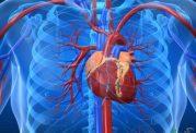 بازیابی سلولهای از دست رفته قلب با کمک سلول های بنیادی