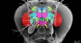 گرافی جالب از نورون های مغز پشه