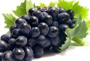 خوردن هسته انگور روند رشد سلول های سرطانی را متوقف می کند