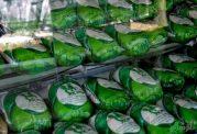 علت تفاوت قیمت مرغ سبز با مرغ معمولی