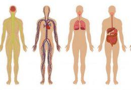 اطلاعات جالب پیرامون عملکرد برخی اعضا در بدن