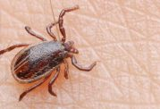 خطر انتشار تب کریمه کنگو