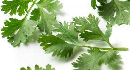 درمان بیماری های مختلف با مصرف سبزی