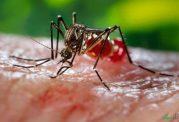 تشدید شیوع بیماری ویروسی چیکونگونیا در پایتخت هند