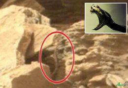 حضور موجودات فرازمینی در مریخ
