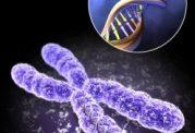 درمان برخی  بیماریها با سلولهای بنیادین