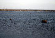 خطرات زیست محیطی خشکی تالاب گاوخونی