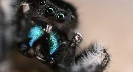 توانایی های بالای عنکبوت ها