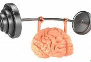 فایده های مختلف ورزش بر عملکرد مغز