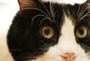 برطرف کردن رفتارهای نامناسب گربه