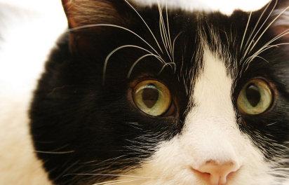 برخی عارضه ها در گربه های پیر
