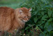 تاثیرات مختلف علف گربه بر این حیوان