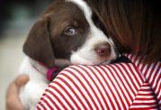 مشکلات ناشی از کیسه مقعدی در حیوانات