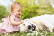 چه سگی مناسب کودکان است؟