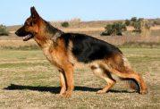 4 راه برای درمان و کاهش روند دیسپلازی در سگ